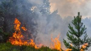 Vier Mal so viele Waldbrände wie 2017