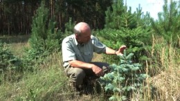 Hilfe! Unsere Weihnachtsbäume vertrocknen