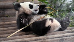 Enorme Umsatzverluste im Berliner Zoo