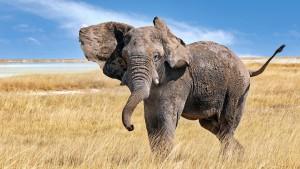 Weg frei für die Rückkehr der charismatischen Tiere