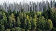 Bund und Länder wollen Finanzhilfen für den Wald.