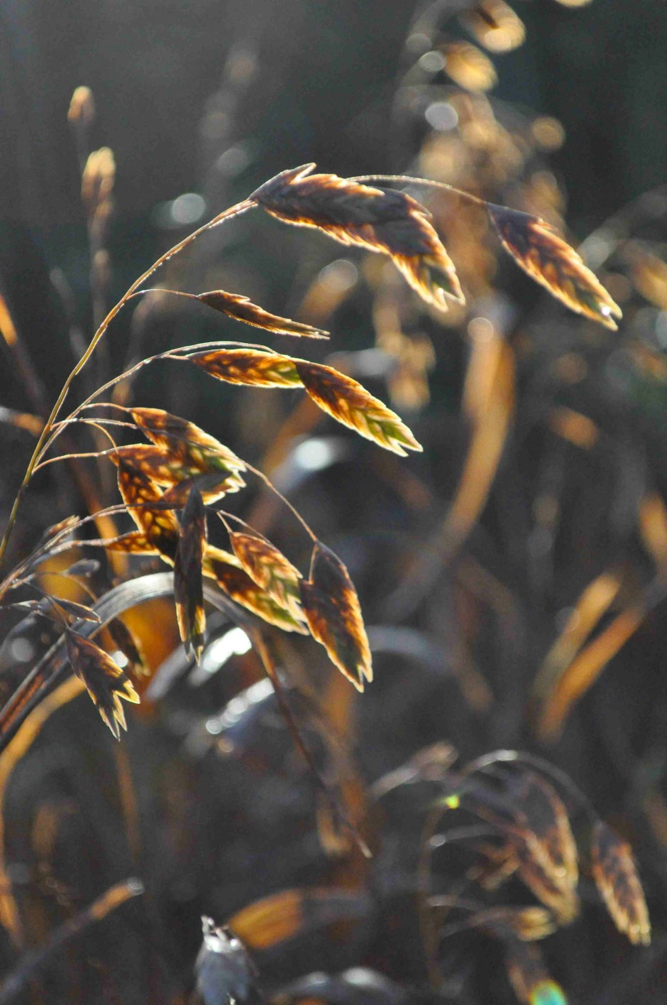 Pflanzen morbide sch nheit drinnen drau en faz for Pflanzen drinnen