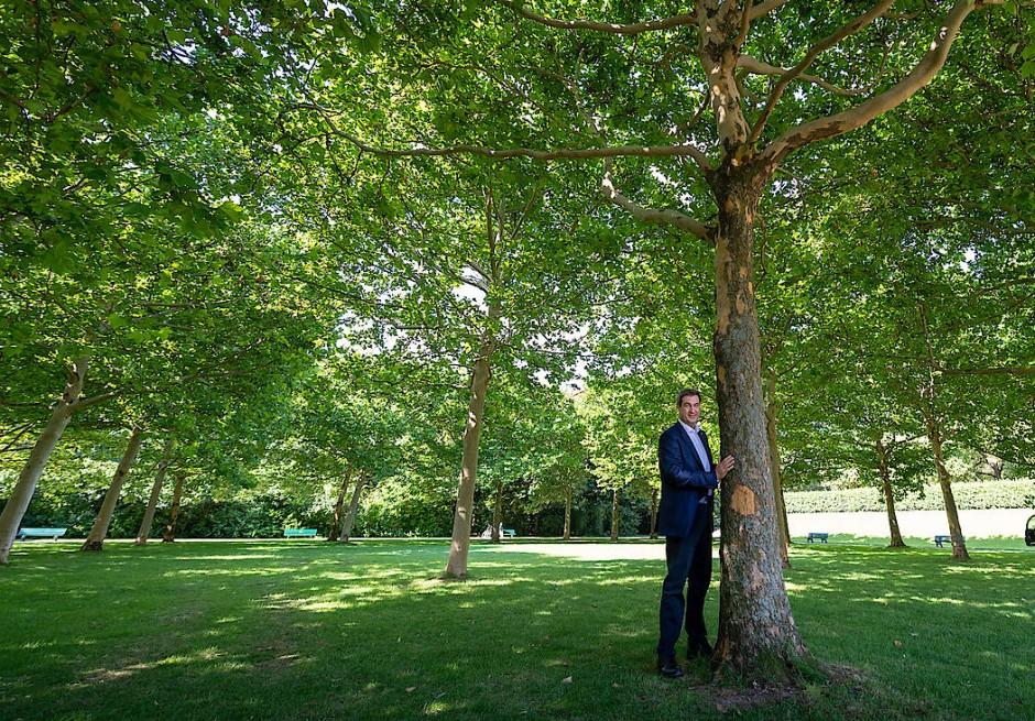 Mein Freund, der Baum: Markus Söder im September 2019 im Hofgarten hinter der Staatskanzlei in München