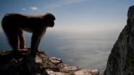 Gibraltar bleibe britisch, so lange die Affen auf dem Felsen blieben, heißt es. Von der EU ist keine Rede.