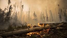 Heftige Waldbrände dauern an