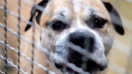 Säugling stirbt nach Hundeattacke