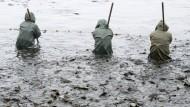 31. Oktober 2015. Keine Angst vor nassen Füßen scheinen diese drei Herren im südbrandenburgischen Peitz zu haben. Bei der Karpfenernte ziehen sie im Wasser stehend ein Fangnetz durch den fast abgelassenen Fischteich.