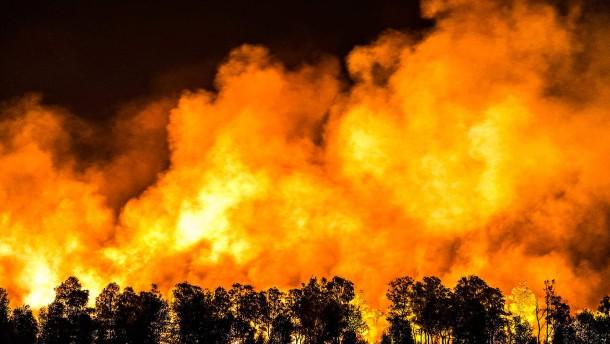 Waldbrände halten Feuerwehren in Atem