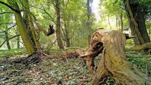 Zu wenig Naturwald in Hessen