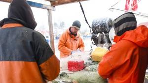 Deutsche Fischer dürfen mehr Makrelen, aber weniger Kabeljau fangen