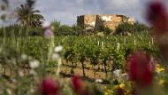 Weinstöcke nahe der südsizilianischen Stadt Menfi.