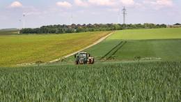 Wie sehr die Ernten am chemischen Pflanzenschutz hängen