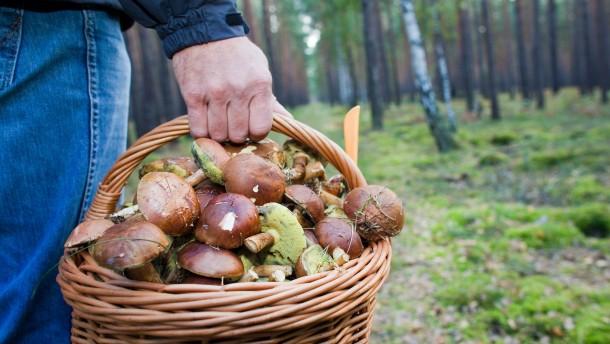 Retter finden Pilzsammler mithilfe von Handy-Daten