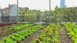 Urbane Gärten