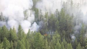 Waldbrände setzen etwas weniger CO2 frei als bisher angenommen