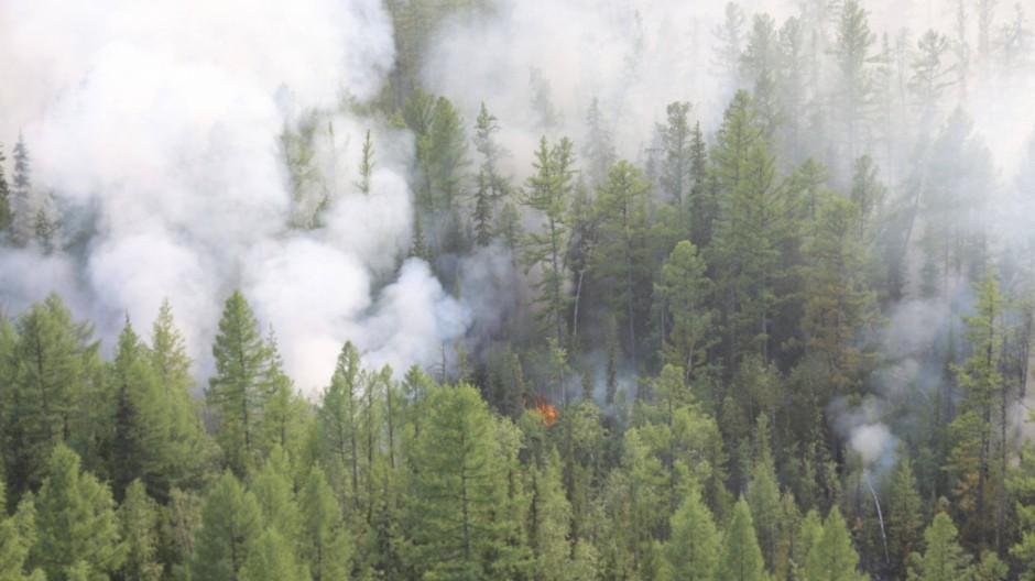 In Sibirien brennen dieses Jahr riesige Waldflächen.