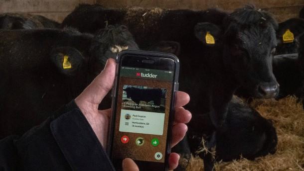 Tinder für Rinder