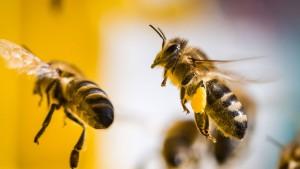 Bienenretten will gelernt sein
