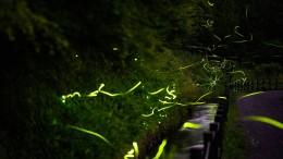 Japanische Stadt erstrahlt im Glühwürmchen-Schein