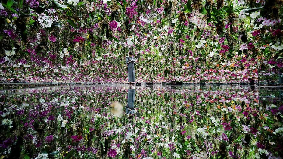 """Und so sieht ein ganz moderner japanischer Garten aus: Das teamLab ist ein multisensorisches Museum für Installationen und Digitalkunst. Hier sieht ein Mitarbeiter im neu eröffneten """"Floating Flower Garden"""" nach den dreizehntausend blühenden Orchideen, die von der Decke hängen und sich im Boden spiegeln."""