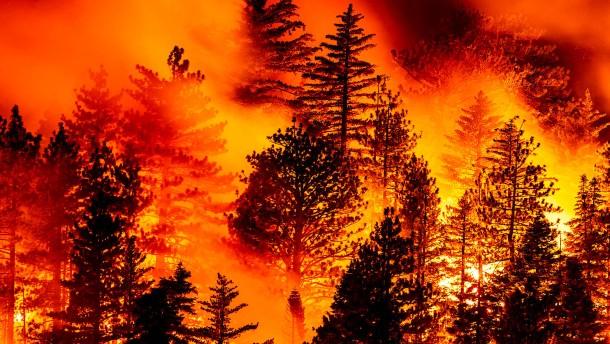 Mindestens 26 Tote bei Bränden im Westen von Amerika