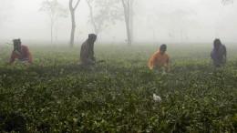Mehr als hundert Tote nach Schnaps-Vergiftung in Indien