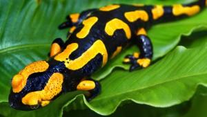 Bonn verwaltet die globale Artenvielfalt