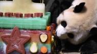 Panda-Geburtstagsparty im Zoo von Washington