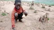 Afrika fordert blühende Landschaften