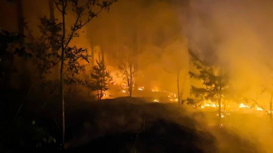 Autofahrer filmt Fahrt durch Waldbrand