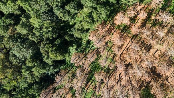 BUND: Hinz verschleppt machbare Rettung des Waldes