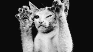 Von Katzen mit Menschen