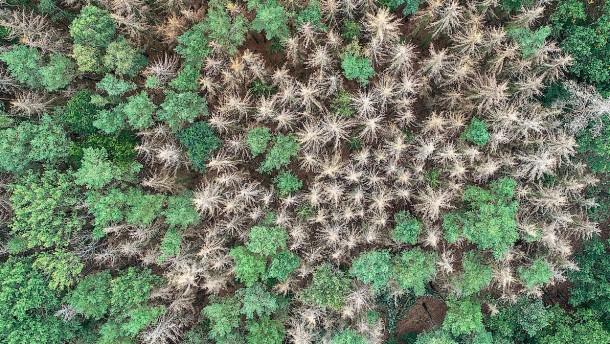 Nationaler Waldgipfel soll dem Klimaschutz zuarbeiten