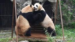 Was darf ein Zoo?
