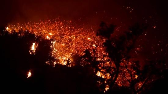 Der Wald brennt weiter