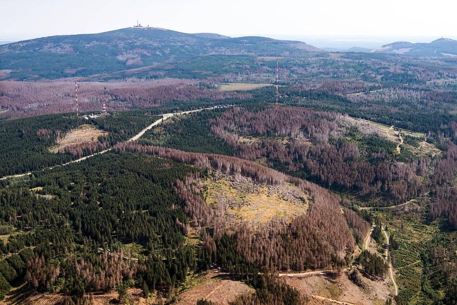 Viele Teile des Waldes konnten sich nicht von der Hitze wiederholen wie hier im Nationalpark Harz.