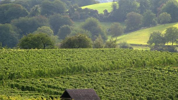 Hessens Weinbaugebiete am stärksten nitratbelastet
