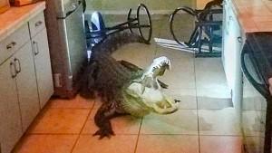 Alligator verwüstet Küche
