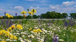 Mehr Blühflächen sollen Artenvielfalt stärken