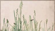 """Noch nie hat die Menschheit so viele Bilder produziert wie im Zeitalter des Smartphones. Aber was da festgehalten wird, rauscht in Sekunden vorbei. Künstler und Forscher früherer Zeiten haben sich noch unendliche Mühe gegeben, die Natur so nachdrücklich darzustellen, wie es überhaupt geht.    """"Das große Rasenstück"""" von 1503 gilt neben dem noch häufiger gezeigten, ein Jahr zuvor entstandenen """"Feldhasen"""" als Albrecht Dürers (1471-1528) berühmteste Naturstudie. Es diente möglicherweise dazu, potentiellen Kunden die hohe künstlerische Qualität seiner Werkstatt zu demonstrieren, die er nach seinen italienischen Wanderjahren in Nürnberg gegründet hatte."""