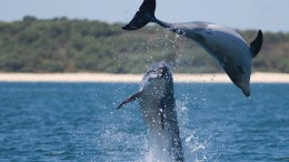 Delfine werden verdrängt