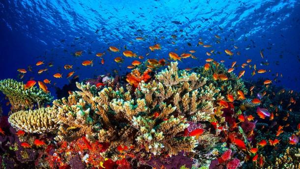 Great Barrier Reef kommt nicht auf die Rote Liste