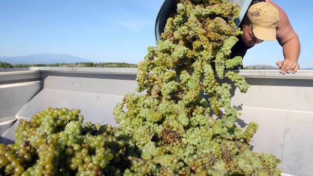 Hitze schmälert Weinproduktion in Frankreich deutlich