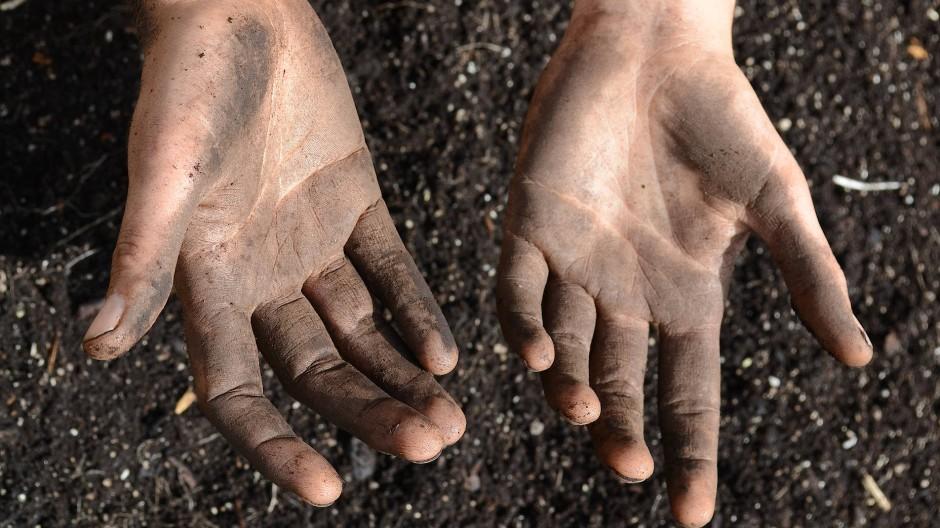 """Die Kunst geht an die Welt oft mit leeren Händen heran, aber wenn sie bereit ist, sich schmutzig zu machen, gräbt sie Wahres aus: Szene aus """"Wild Plants"""""""