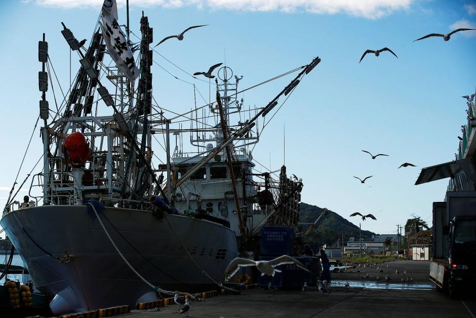 In den frühen Morgenstunden fährt ein Fischerboot in den Hafen von Ofunato ein.