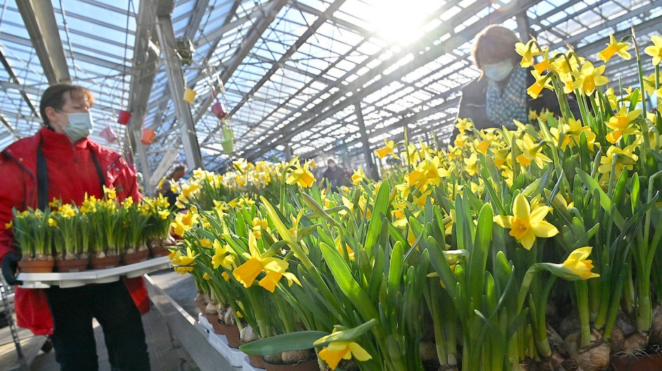 Gartencenter sollen bundesweit ab der kommenden Woche wieder öffnen dürfen.