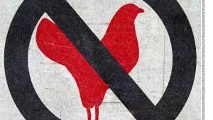Die nächste Vogelgrippe kommt bestimmt