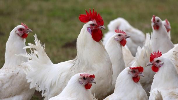 Russland meldet Übertragung von Vogelgrippe auf Menschen
