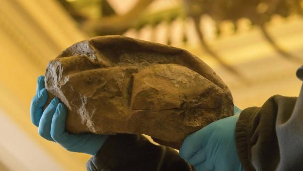 Dinosaurier-Ei in Antarktis gefunden