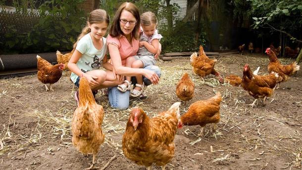 Mietvertrag mit Huhn